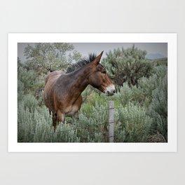 Mule in Wyoming Art Print
