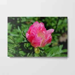 Dramatically Delivered Delight Metal Print