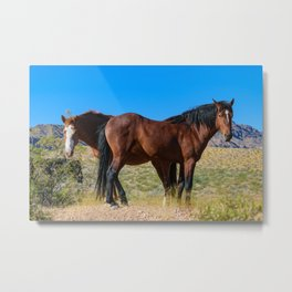 Wild_Horses 0163 - Nevada Metal Print