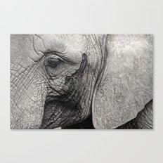 pachyderm Canvas Print