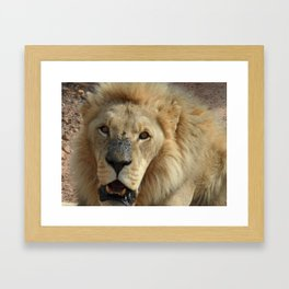 Simba Framed Art Print