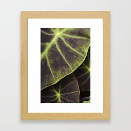 Leaf Line Art Elephant Ear Study Framed Art Print