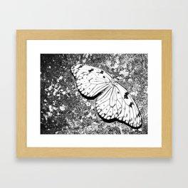 Dead Butterfly Hold Pure Beauty  Framed Art Print