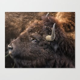 Wild Eye - Bison - Yellowstone Canvas Print
