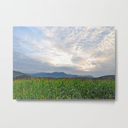 Cornfield in the morning light Metal Print