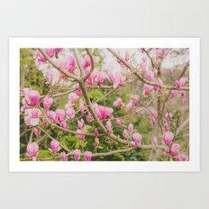 Strawberry Magnolias Art Print