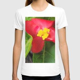 Wildflower of Oreum , Jeju Island, Korea. T-shirt
