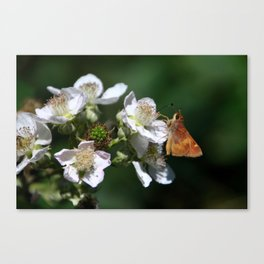 teeny take two Canvas Print