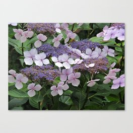 Hydrangea Violet Hues Canvas Print
