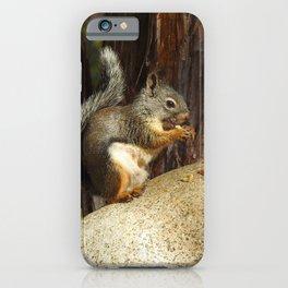 Douglas squirrel, wildlife, squirrels iPhone Case