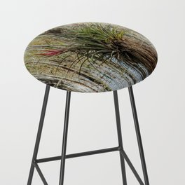 Unexpected Beauty Bar Stool