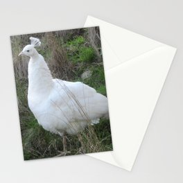 Albino peahen Stationery Cards