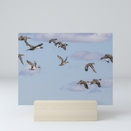 Mallards, Northern Pintails and a Green-winged Teal in Flight Mini Art Print