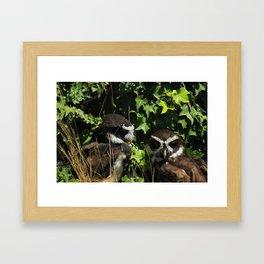 Pair of Spectacled Owls Framed Art Print