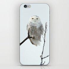 Snowy in the Wind (Snowy Owl) iPhone & iPod Skin