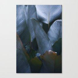 silver gray greens Canvas Print