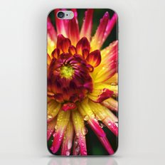 Dahlia Photography Close Up Macro photography iPhone & iPod Skin