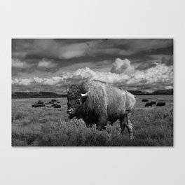 American Buffalo Bison in the Grand Teton National Park in Black and White Canvas Print