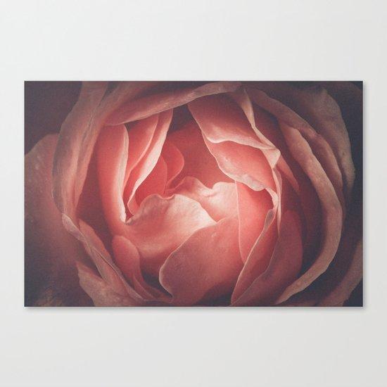 Pastel pink rose flower blossom Canvas Print
