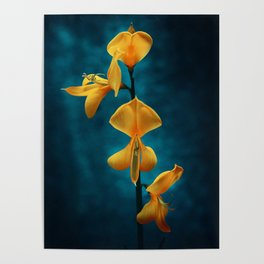 yellow beauty Poster