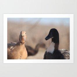 What the Quack? Art Print
