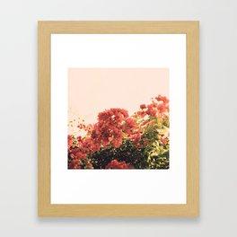 Bouganvillea Morning #3 Framed Art Print
