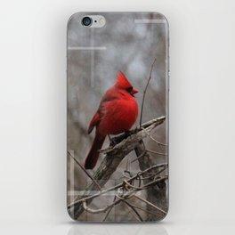 The Cardinal  iPhone Skin