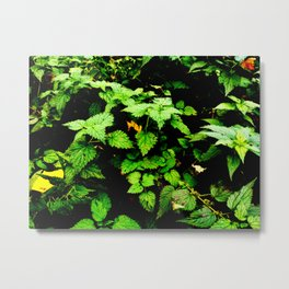 nettle shrub Metal Print