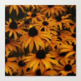 Black-Eyed Susan, yellow autumn daisy Canvas Print