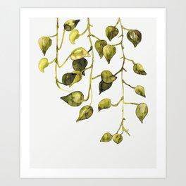 Golden Pothos - Botanical ink painting Art Print