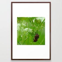 Bugs times two Framed Art Print