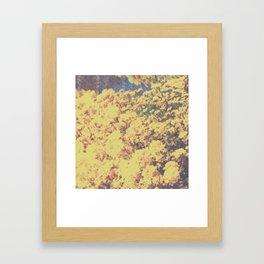 field flower 2 Framed Art Print
