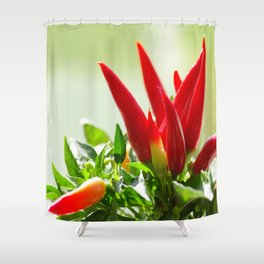 Chili peppers on the vine Shower Curtain