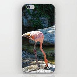 Pink Flamingo drinking some wah wah iPhone Skin