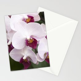 Longwood Gardens Orchid Extravaganza 4 Stationery Cards