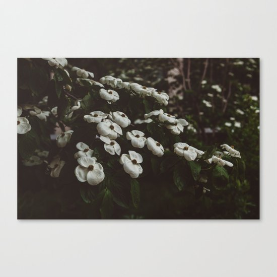 Highline Blooms IV Canvas Print
