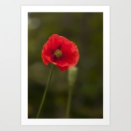 Poppy Red Art Print
