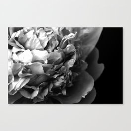 Black and White Summer Peony Canvas Print
