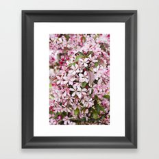 Apricot blossoms Framed Art Print
