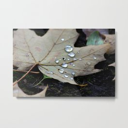 Leaf with droplets Metal Print