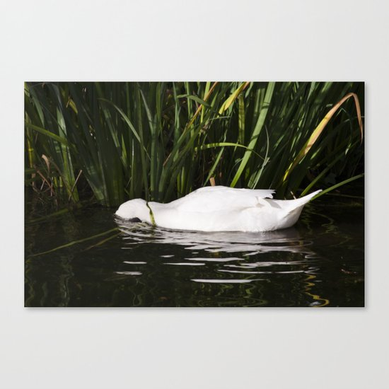 Sleep in the water Canvas Print