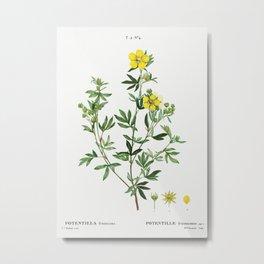 Potentilla frutescens (Potentille frutescente) from Traité des Arbres et Arbustes que l'on cultive e Metal Print
