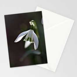 Snowdrop   Spring   nature photography Stationery Cards