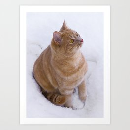 Kitten Discovers Snow! Art Print