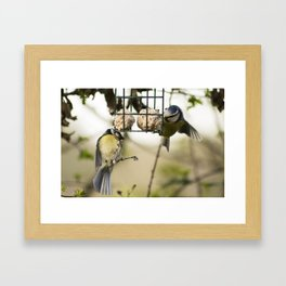 Two Blue Tits Hanging around for food #Bird #Feeder #Tit Framed Art Print