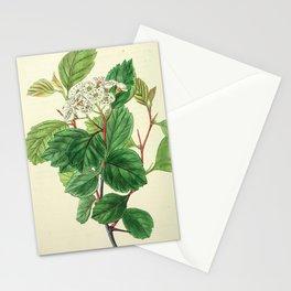 Unidentified Illustration from Edwards' Botanical Register Stationery Cards