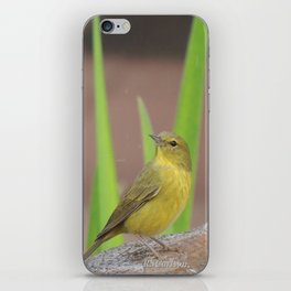 Yellow Warbler at the Fountain iPhone Skin