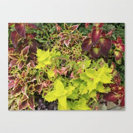 Foliage Fiesta With A Touch Of Begonia Canvas Print