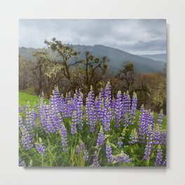 Lupines In The Hills Metal Print