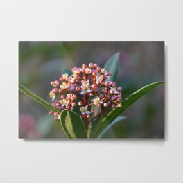 Pretty in Spring Metal Print